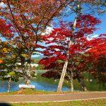 ▶蓼科湖の紅葉