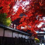 ▶信州もみじ寺 長円寺の見事な楓(紅葉)本当にきれいです。
