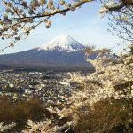 「富士桜爛漫」写真家斉藤大果のフォトの世界